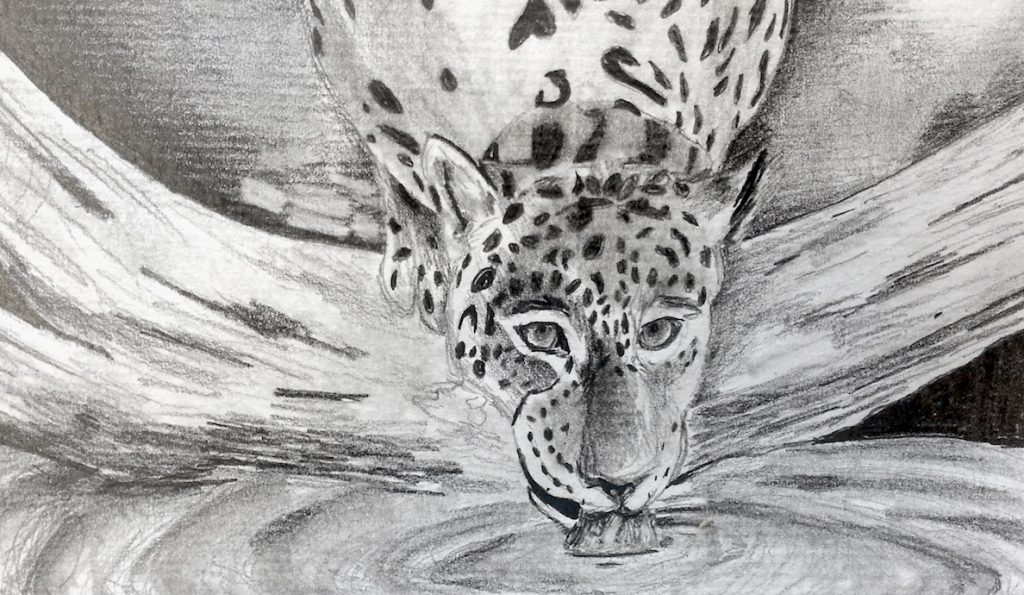 drawing of jaguar drinking